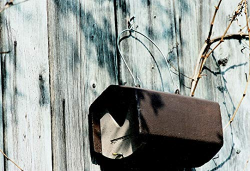 Schwegler Naturschutzprodukt Vogel Nistkasten Nisthöhle Vogelhöhle Halbhöhle Typ 2HW räubersicher aus Holzbeton Höhe 20 cm