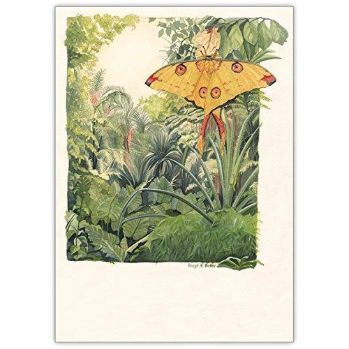 In 5-delige set: Verstuur fantastische groeten met deze vlinder tegen jungle achtergrond • Elegante vouwkaartenset met enveloppen binnen blanco