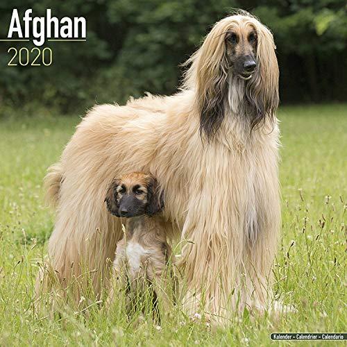 Afghan Calendar 2020