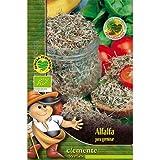 Semillas ecológicas de Alfalfa