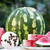 160Pcs / Bolsa Semillas De Sandía Semillas De Frutas Dulces Y Comestibles Productivas Para Jardín Semillas de sandía