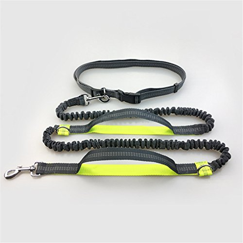 Peting Stretchable Manche Nylon chien à laisse avec Bungee réfléchissants Bundled Parfait pour courir, marcher, la formation