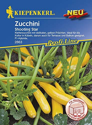 Zucchinisamen - Zucchini Shooting Star von Kiepenkerl
