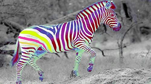 KsimYa Rompecabezas Jigsaw Puzzle, 1000 Pieces Colorful Zebra Puzzle Games Art Toys para Adultos Y Niños