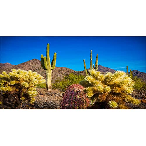 AWERT Fondo de terrario de 120 x 46 cm, azul cielo desierto...
