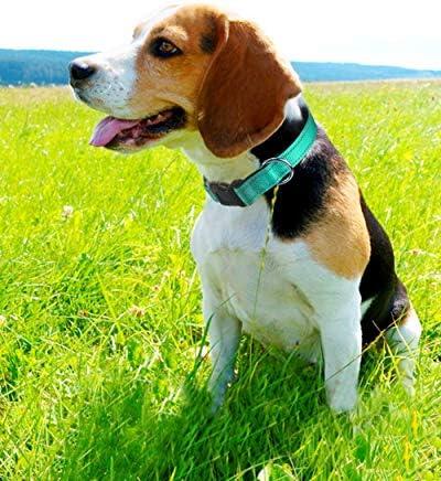 Collar para perros _image1