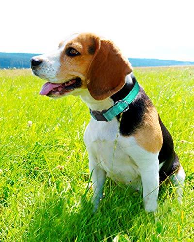 Joytale Reflective Dog Collar,Soft Neoprene Padded Breathable Nylon Pet Collar Adjustable for Medium Dogs,Teal,M