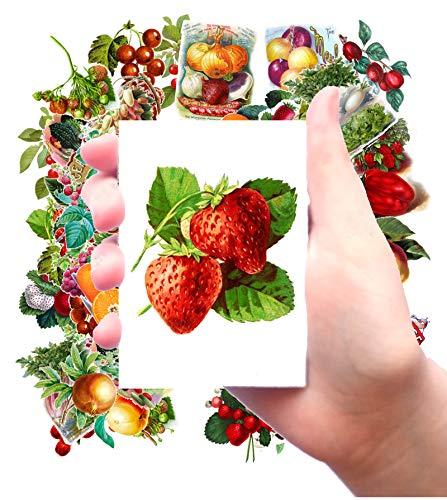 vintage fruit stickers - 9
