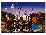 Kunstdruck/Poster: Salvador Dalí Schwäne spiegeln
