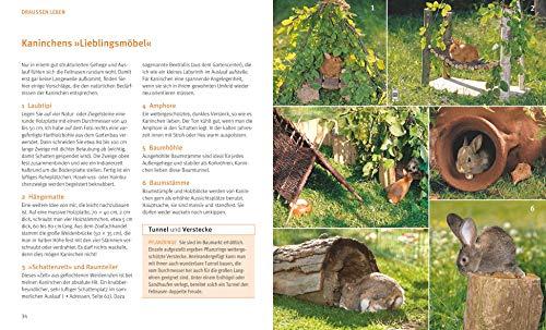 Kaninchen im Außengehege: Pures Frischluft-Vergnügen - 8