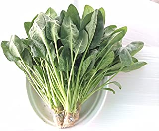 無農薬 サラダほうれん草 (70g培地付き)10袋パック