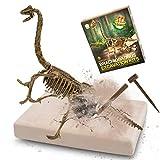 MUSCCCM Dinosaur Dig Kit Braquiosaurio, Dino Skeleton Fossil Excavation Kit Realistic Dinosaur Model Juguetes educativos Regalo para Niños Niñas