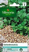 La coriandre aime la proximité de toutes les potagères craignant les pucerons Vous pouvez laisser mûrir les graines sur le plant avant de les cueillir; jeunes, elles ont une odeur désagréable