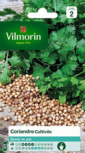 Vilmorin 5875046 Pack de Graines Coriandre Cultivée