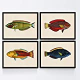 Nacnic Set de 4 láminas con pez Colorido Efecto Vintage Tono Amarillo Azul y Rojo. Peleng. Composicion de 4 Peces en tamaño A4, Fondo Papel Antiguo Vintage Poster Papel 250 gr Marco