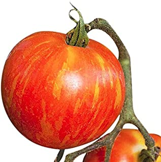 Organic Mr. Stripey Heirloom Tomato Seeds - Large Tomato - One of The Most Delicious Tomatoes for Home Growing, Non GMO - Neonicotinoid-Free.