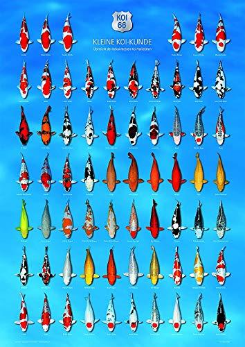 AquaLogistik- Koi-Poster, Höhe 84cm, Breite 60 cm