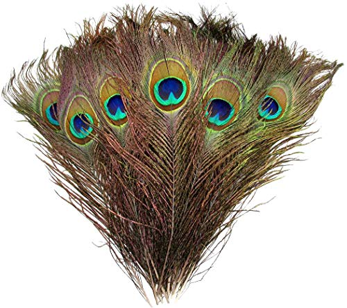 """Natural Peacock Feathers 10""""-12"""" (50) Wedding Christmas Halloween Décor by Blisstime"""