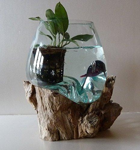 exotica import Aquarium ou Vase en Verre soufflé sur Racine de Bois, modèle Unique, Choix sur Photos envoyées après Votre Commande (Hauteur Environ 25cm)