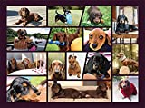 Dachshund Dogs 500 Piece Puzzle for Dachshund Lover, Doxie Daddy & Doxie Mama, Fun Dog Puzzle for Dachshund Jigsaw Puzzles Lover