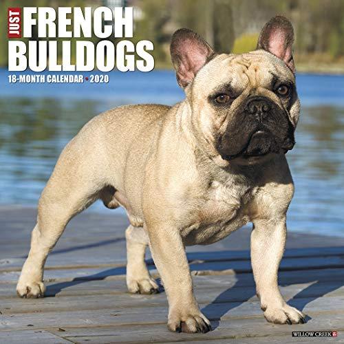 Just French Bulldogs 2020 Wall Calendar (Dog Breed Calendar)