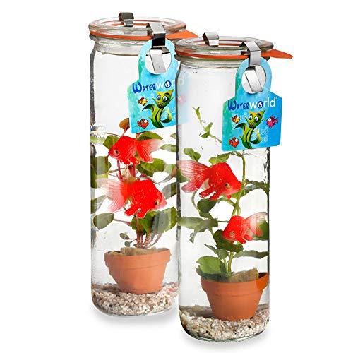 GreenGifts Waterworld Glas - Ø 6 cm Höhe 21 cm - 2er Set - 2 Wasserpflanzen- 4 Plastik Goldfische