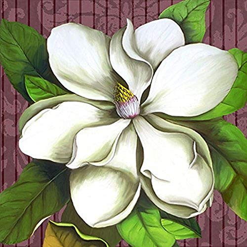 Buyartforless Square Magnolia Stripe 24x24 Giclee Shell Art Print Floral Poster Decorative by Jill Meyer