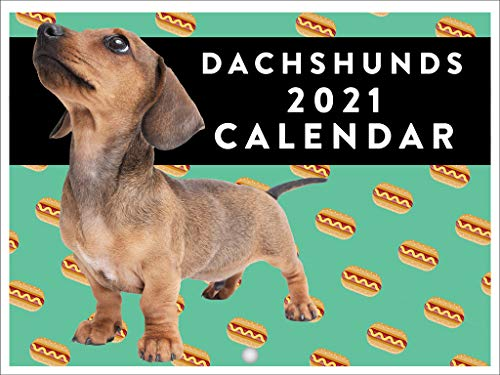 Dachshunds Hot Dogs Cute Funny Dog Breed 2021 Wall Calendar 12 Month Monthly Full Color Thick Paper Pages Folded Ready to Hang 18x12 inch