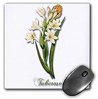 Tuberose Pretty Spring Flowering Plant植物プリント–マウスパッド、8× 8インチ(MP 181172_ 1)