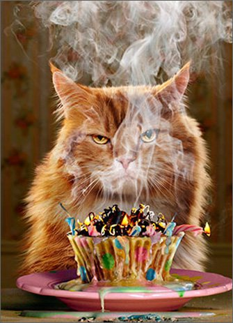 Humorous Birthday Card (AVANTI200112) - Ginger Cat - Another Year... Another Blaze of Glory