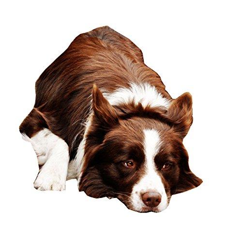 NUEVO Border Collie Perro Cuello–Tamaño Grande–40cm a 50cm/15,7A 19,7cm