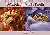 DACKELmix Elli Pirelli (Wandkalender 2021 DIN A4 quer)