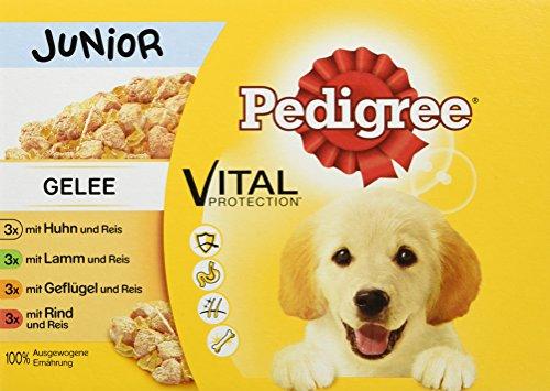 PEDIGREE Vital Protection Comida para perros con pollo y cordero en gelatina, 4 cajas x 12 x 100 g, 4.8 kg