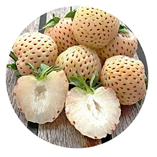 50 Samen weisse Erdbeere/Pineberry/Fragaria x ananassa/Pineapple strawberry/Ananas Erdbeere
