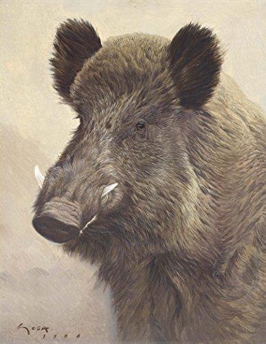 Jabalí - Lámina sobre lienzo. Retrato de un verraco. (Sus scrofa). Cuadro de 31 x 40 cms. Cuadros de animales, mamíferos