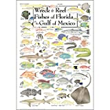 Earth Sky + Water Poster - Wreck & Reef Fishes of Florida & The Gulf of Mexico