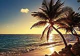 PICSonPAPER Hochwertiges Poster Palmen im Sonnenuntergang,