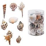 WANDIC Conchas Marinas, Caja de Cuentas de Conchas Marinas Naturales Mixtas para Manualidades, joyería, Colgantes, decoración del hogar, 240 gérmenes
