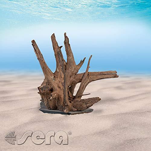 sera 32361 Scaper Wood M (Stück von 18 bis 20  cm) Naturholz Deko fürs Aquarium - Dekoration Aquascaping