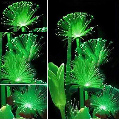 ScoutSeed 100 Stücke Smaragd Fluoreszierende Blumensamen Pflegeleicht Pflanzen Mehrjährige Pflanzen