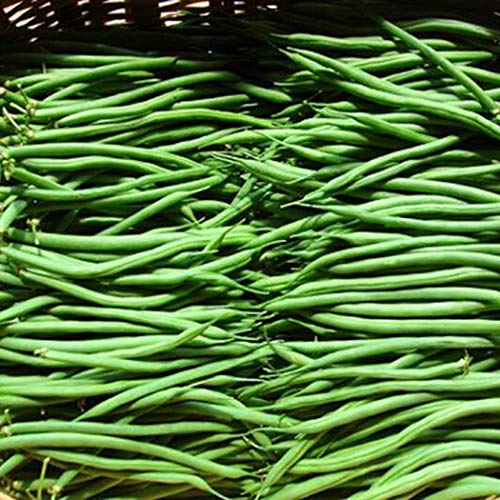 MelysUS Garden-Green Beens, Pole Kentucky Wonder Seeds, Organic, Non-GMO,Hearty Healthy Green Been Vegetable Seeds for Planting-Garden Seeds