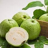 Granos de frutas15Pcs/Sac Guava Seeds Sweet Fresh Portable Natural Non-OGM Psidium Guajava Seeds for Garden - Guava Seeds
