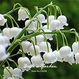 50pcs del lirio blanco de las semillas del valle Convallaria majalis perenne de flores del jardín de las semillas de flor de Bonsai Hermosa planta de bricolaje