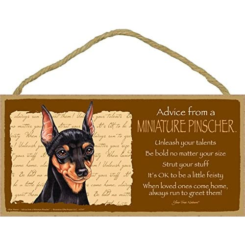 3240fb0c94f Advice from a Miniature Pinscher (Min Pin) 5