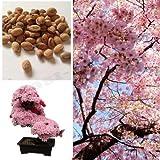 Semi di Sakura giapponesi rari Semi di fiori di ciliegio Piante bonsai per casa e amp; Garden 15 semi K58