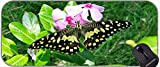 XXL Gaming Mouse Pad Equipo de Escritorio Grande, Naturaleza orégano Flor Flores Mariposa Antideslizante Goma Mousepad