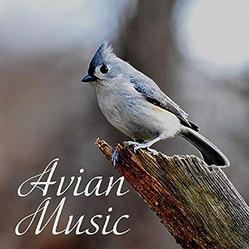 Avian Music