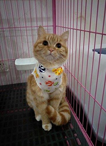術後服 猫 犬 術後ウェア 猫用...
