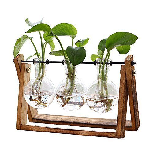 Plant Terrarium with Wooden Stand, Air Planter Bulb Glass Vase Metal Swivel Holder