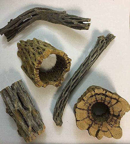 catappa-leaves Natur Deko Set für Aquarien und Terrarien 5 Stücke Cholla Kaktus Holz